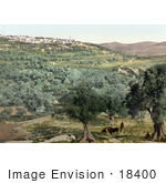 #18400 Photo Of The Village Of Samaria Holy Land Israel