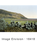 #18418 Photo Of Cactus Plants And Mount Carmel Holy Land Israel