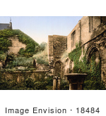 #18484 Photo Of Vines Covering The Ruins Of The Virgin'S Crypt St Bavon Abbey Ghent Belgium