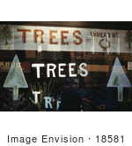 #18581 Photo Of A Window Display With Christmas Trees Plants And Wreaths