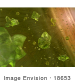 #18653 Stock Photo Of Possible Seeds Of Planets Green Crystals In Space
