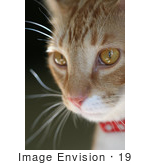 #19 Cat Portrait by Kenny Adams