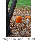 #19359 Photo Of Carved Halloween Pumpkins On Autumn Leaves By A Tree Trunk