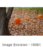 #19361 Photo Of Three Carved Halloween Pumpkins On Fallen Leaves By A Tree Trunk
