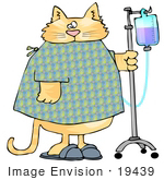 #19439 Chubby Orange Tabby Cat In A Hospital Gown And Slippers Walking With Iv Fluids Clipart