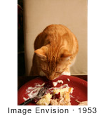 #1953 Cat Sneaking Human Food