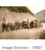 #19537 Photo Of Men And Cows With Wagons On A Dirt Road In Bosnia