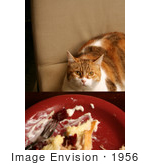 #1956 Cat Sitting At A Dinner Table