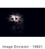 #19821 Photo Of Seedheads Of Apache Plume Flowers Lit Against Darkness