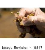 #19847 Photo Of A Man Holding Carnivorous Sundew Plants