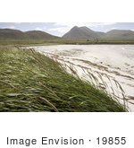 #19855 Photo Of Tall Grasses On The Coast At Simeonof Island Alaska