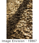 #19867 Stock Photography: Golden Sunlight Over Autumn Leaves On A Path