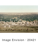 #20421 Historical Stock Photography Of A Shepherd Tending To His Flock Sallah Damascus Holy Land Syria