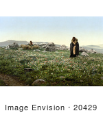 #20429 Historical Stock Photography Of Two Shepherds Tending To Their Sheep On A Hilltop With Wildflowers Hadjar En Nasaroh Holy Land