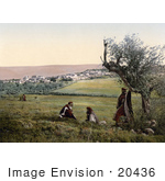 #20436 Historical Stock Photography Of Men By A Tree Near Cana Of Galilee Holy Land