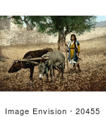 #20455 Historical Stock Photography Of Native Of Palestone Working With An Ox And A Mule In The Holy Land