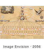 #2056 Diagram Of The Federal Government And American Union