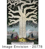 #20778 Stock Photography Of A Tree With Dates And Events In Irish History