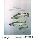 #20961 Clipart Image Illustration of King Salmon Fish Swimming in Blue Waters by JVPD