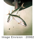 #20962 Clipart Image Illustration Of Yellowtail Fish (Seriola Lalandei) Swimming After Hooks Under A Boat