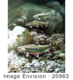 #20963 Clipart Image Illustration of Brook Trout Fish Swimming on a Rocky Bottom by JVPD