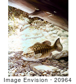 #20964 Clipart Image Illustration of Smallmouth Bass Fish Swimming Underwater by JVPD