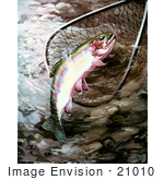 #21010 Clipart Image Illustration of a Golden Trout in a Fishing Net by JVPD