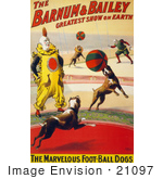 #21097 Stock Photography Of The Marvelous Foot-Ball Dogs And A Clown Performing In The Barnum And Bailey Circus