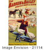 #21114 Stock Photography Of A Barnum And Bailey Circus Poster Of Clowns Performing With Geese Roosters And A Donkey