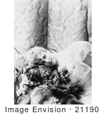 #21190 Stock Photography Of Lillian Russell Lying And Resting Her Head On A Tiger Skin 1893
