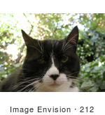 #212 Image of a Tuxedo Cat by Jamie Voetsch