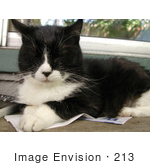 #213 Photo of a Tuxedo Cat on Newspaper by Jamie Voetsch