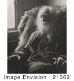 #21362 Historical Stock Photography Of Walt Whitman Sitting In A Chair By A Window 1891