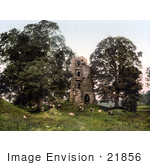 #21856 Historical Stock Photography Of Cattle Grazing In Front Of The Ruins Of Kirkoswald Castle Kirkoswald Cumbria England