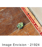 #21924 Stock Photography of a Tuft of Carpet Padding by a Carpet Tack Strip on a Dusty Wood Floor Following the Removal of Carpet and Padding by Jamie Voetsch