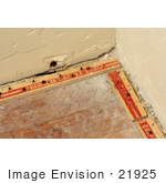 #21925 Stock Photography of Nails in Two Tack Strips Meeting in a Corner on a Dusty Wood Floor Following the Removal of Carpet and Padding by Jamie Voetsch