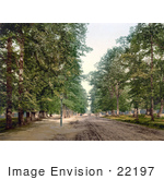 #22197 Historical Stock Photography Of Trees Lining An Avenue In Southampton England