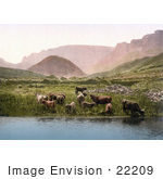 #22209 Historical Stock Photography Of Cows Drinking From A Lake Near A Green Pasture And Mountains In England