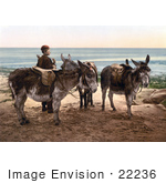 #22236 Historical Stock Photography Of A Little Boy By Saddled Donkeys Waiting For A Job And Standing On A Beach In England