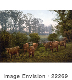 #22269 Historical Stock Photography Of A Group Of Dairy Cows In A Pasture In England