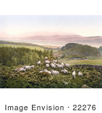#22276 Historical Stock Photography Of Sheep Grazing In A Hilly Pasture Near A Lake In England