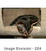 #224 Image Of A Tabby Cat In A Cat Tree