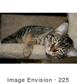 #225 Image Of A Tabby Cat In A Cat Tree