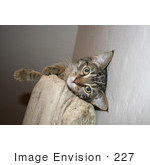 #227 Image Of A Tabby Cat On A Cat Perch
