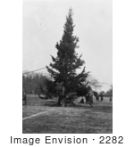 #2282 The National Christmas Tree 1923