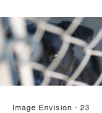 #23 Closeup Picture of a Caged Dog by Kenny Adams