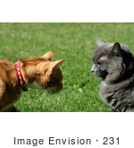 #231 Image Of Two Cats