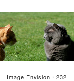 #232 Image of Two Cats Looking at Eachother by Jamie Voetsch