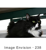 #238 Image of a Tuxedo Cat by Jamie Voetsch