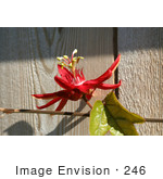 #246 Photo of a Red Passion Flower by Jamie Voetsch